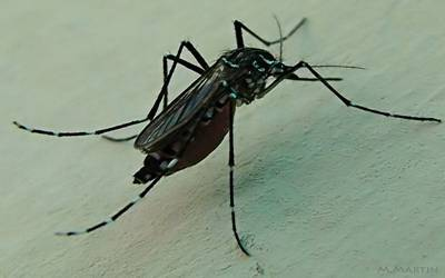 Dengue fever may increase risk of stroke: Study