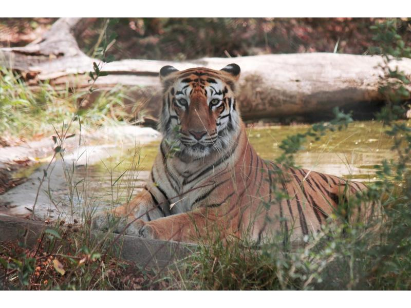 UP's Amangarh Reserve to be renamed as New Corbett Park